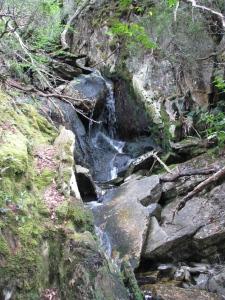 Tasmania southern temperate rain forest